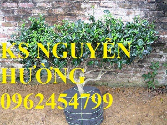 Kỹ thuật trồng và chăm sóc cây trà xanh tại nhà. cung cấp số lượng lớn cây giống trà xanh5
