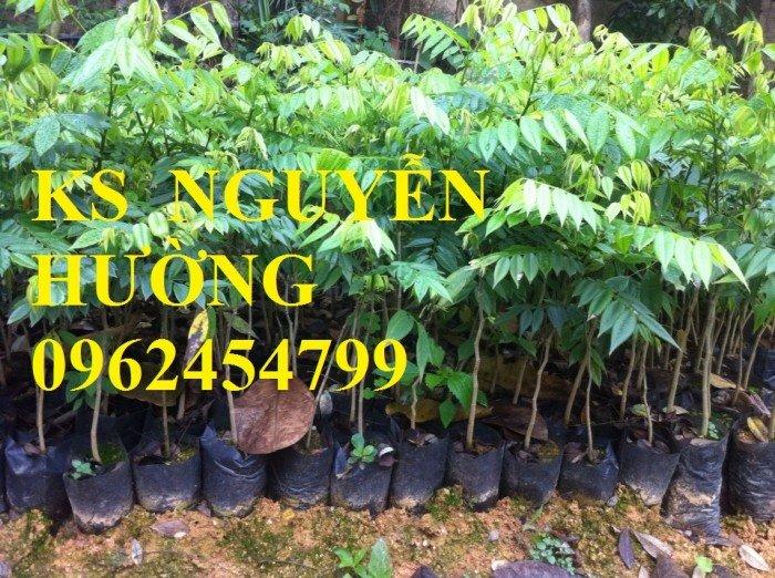 Kỹ thuật trồng cây sưa đỏ, bán giống cây sưa đỏ số lượng lớn - giao cây toàn quốc0