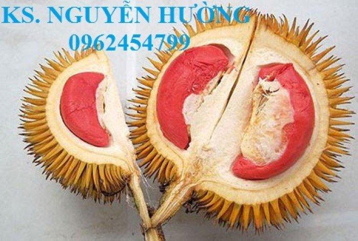 Bán cây giống sầu riêng ruột đỏ, sầu riêng musaking, sầu riêng mosaking chất lượng18