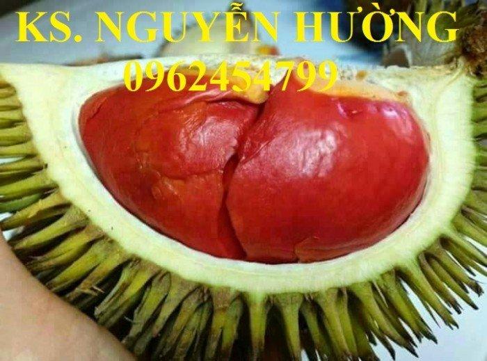Bán cây giống sầu riêng ruột đỏ, sầu riêng musaking, sầu riêng mosaking chất lượng6