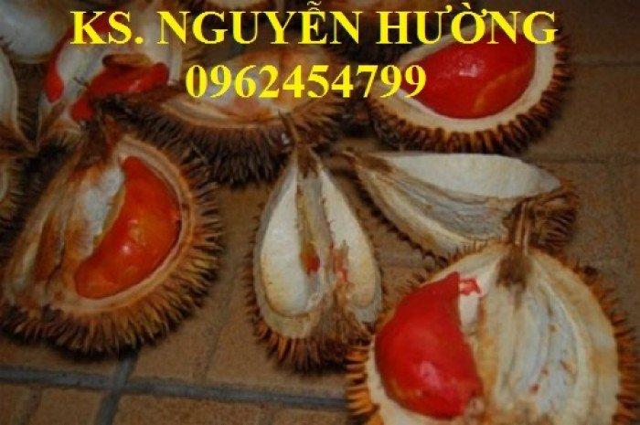Bán cây giống sầu riêng ruột đỏ, sầu riêng musaking, sầu riêng mosaking chất lượng15
