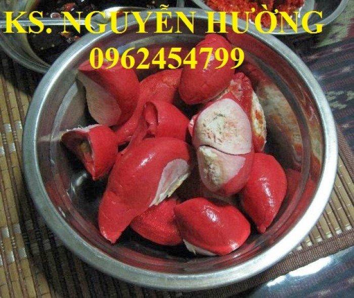 Bán cây giống sầu riêng ruột đỏ, sầu riêng musaking, sầu riêng mosaking chất lượng3