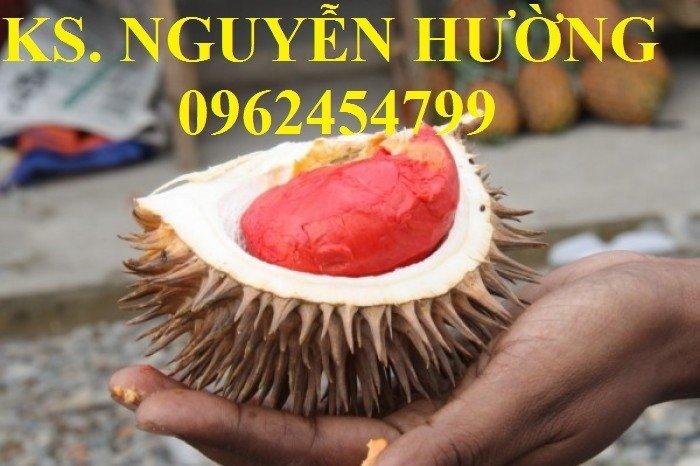 Bán cây giống sầu riêng ruột đỏ, sầu riêng musaking, sầu riêng mosaking chất lượng11