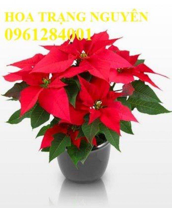 Hoa chơi tết, hoa phát lộc, hoa phát tài. địa chỉ cung cấp hoa chơi tết số lượng lớn uy tín chất lượng6