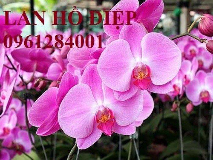 Hoa chơi tết, hoa phát lộc, hoa phát tài. địa chỉ cung cấp hoa chơi tết số lượng lớn uy tín chất lượng15