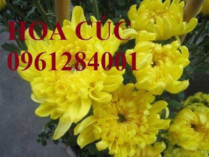 Hoa chơi tết, hoa phát lộc, hoa phát tài. địa chỉ cung cấp hoa chơi tết số lượng lớn uy tín chất lượng16