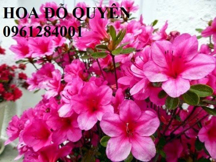 Hoa chơi tết, hoa phát lộc, hoa phát tài. địa chỉ cung cấp hoa chơi tết số lượng lớn uy tín chất lượng12