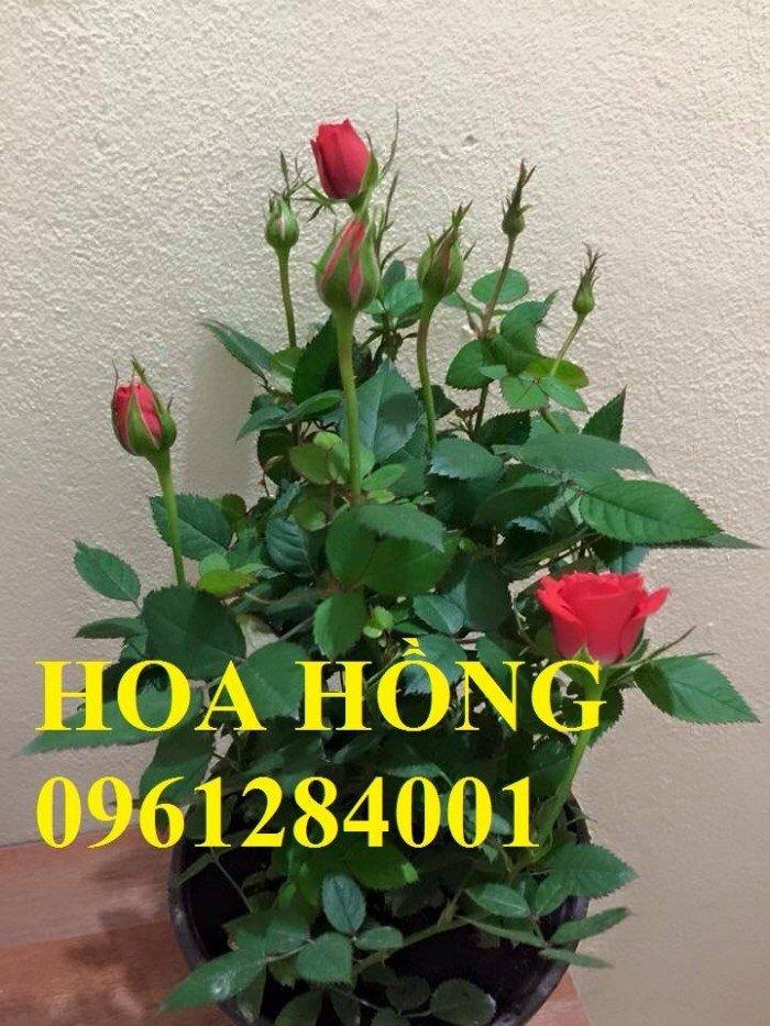 Hoa chơi tết, hoa phát lộc, hoa phát tài. địa chỉ cung cấp hoa chơi tết số lượng lớn uy tín chất lượng2