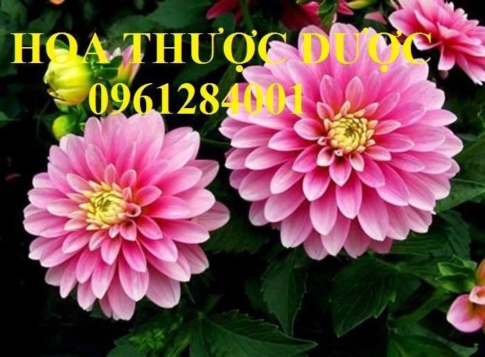 Hoa chơi tết, hoa phát lộc, hoa phát tài. địa chỉ cung cấp hoa chơi tết số lượng lớn uy tín chất lượng7