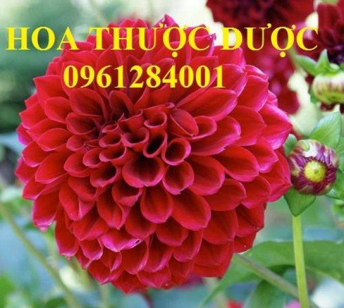 Hoa chơi tết, hoa phát lộc, hoa phát tài. địa chỉ cung cấp hoa chơi tết số lượng lớn uy tín chất lượng5