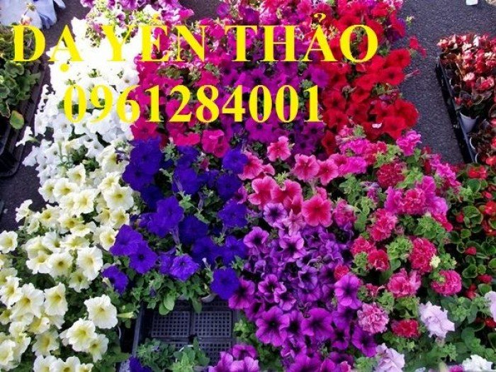 Hoa chơi tết, hoa phát lộc, hoa phát tài. địa chỉ cung cấp hoa chơi tết số lượng lớn uy tín chất lượng9