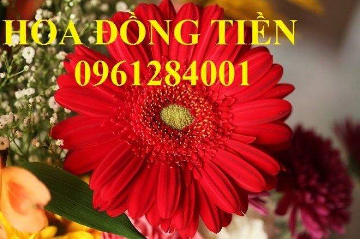 Hoa chơi tết, hoa phát lộc, hoa phát tài. địa chỉ cung cấp hoa chơi tết số lượng lớn uy tín chất lượng13