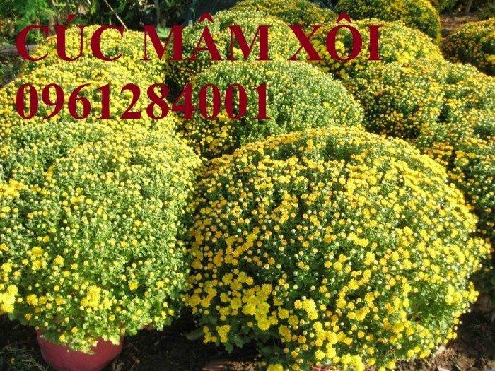 Hoa chơi tết, hoa phát lộc, hoa phát tài. địa chỉ cung cấp hoa chơi tết số lượng lớn uy tín chất lượng10