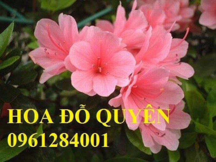 Hoa chơi tết, hoa phát lộc, hoa phát tài. địa chỉ cung cấp hoa chơi tết số lượng lớn uy tín chất lượng3