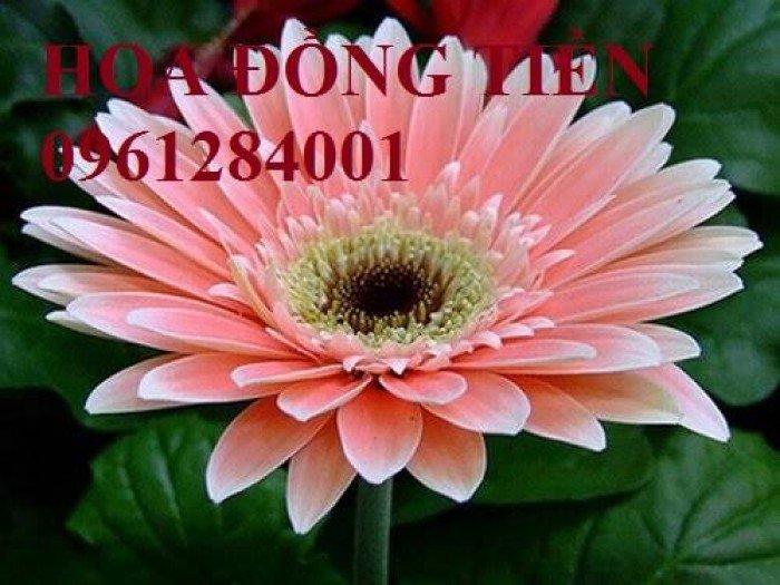 Hoa chơi tết, hoa phát lộc, hoa phát tài. địa chỉ cung cấp hoa chơi tết số lượng lớn uy tín chất lượng14