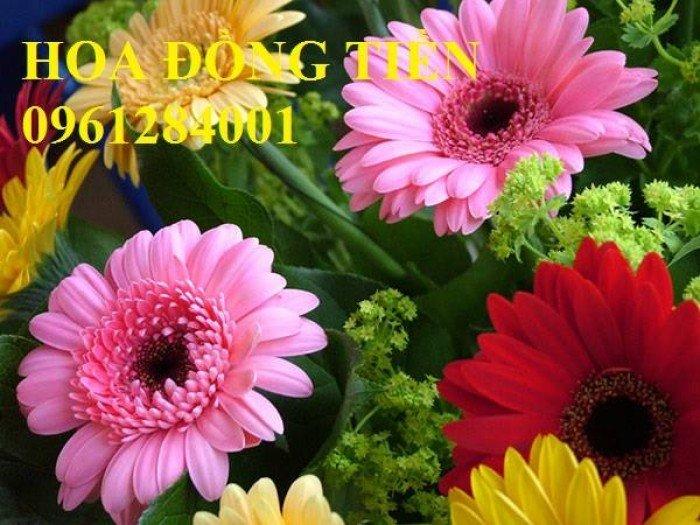 Hoa chơi tết, hoa phát lộc, hoa phát tài. địa chỉ cung cấp hoa chơi tết số lượng lớn uy tín chất lượng4