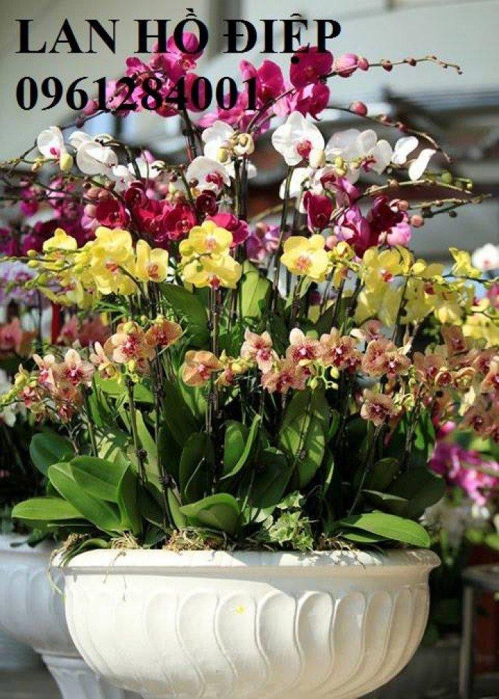 Hoa chơi tết, hoa phát lộc, hoa phát tài. địa chỉ cung cấp hoa chơi tết số lượng lớn uy tín chất lượng0