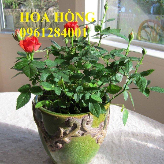 Hoa chơi tết, hoa phát lộc, hoa phát tài. địa chỉ cung cấp hoa chơi tết số lượng lớn uy tín chất lượng1