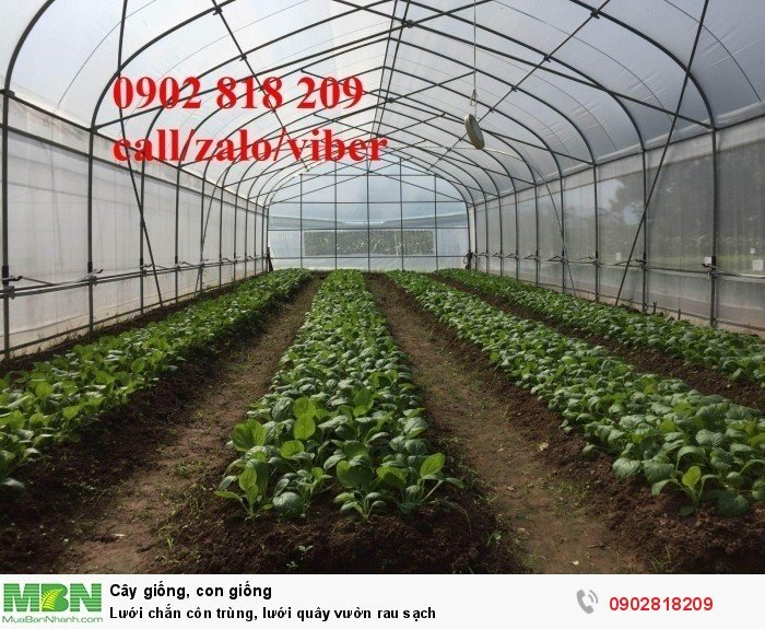Lưới chắn côn trùng, lưới quây vườn rau sạch3