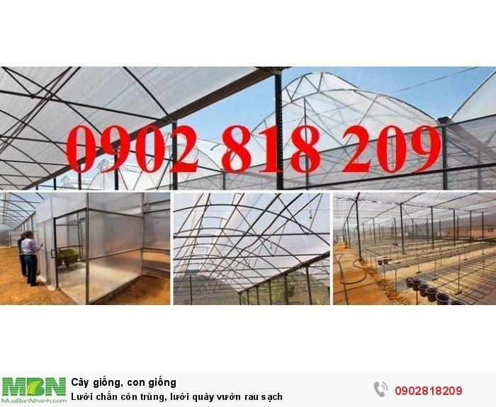 Lưới chắn côn trùng, lưới quây vườn rau sạch8