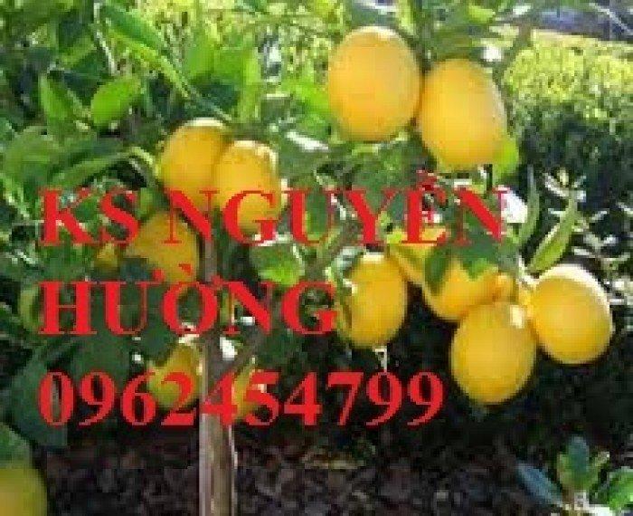 Cung cấp cây giống nhập khẩu, địa chỉ cung cấp cây giống chanh vàng sunrise - giao cây toàn quốc3