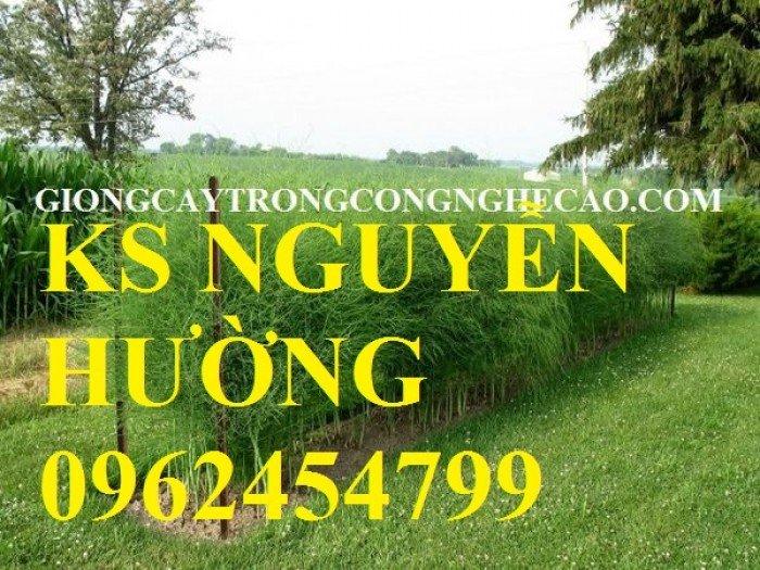 Cung cấp số lượng lớn cây giống măng tây, măng tây xanh, măng tây tím - giao cây toàn quốc5