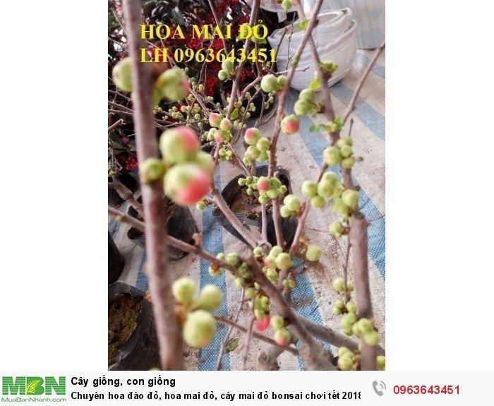 Chuyên hoa đào đỏ, hoa mai đỏ, cây mai đỏ bonsai chơi tết, hàng chuẩn đẹp, giá sỉ tốt nhất thị trường1