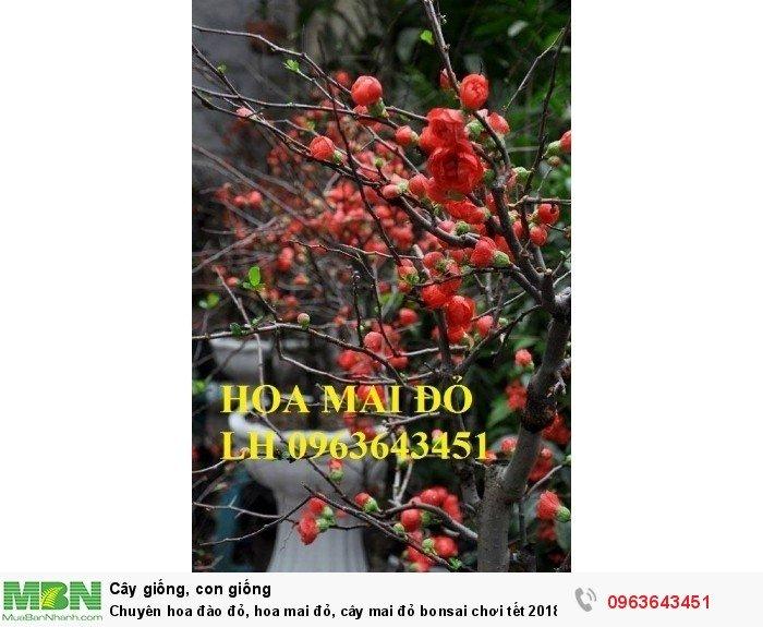 Chuyên hoa đào đỏ, hoa mai đỏ, cây mai đỏ bonsai chơi tết, hàng chuẩn đẹp, giá sỉ tốt nhất thị trường3