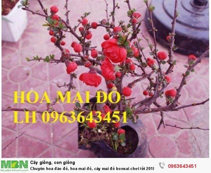 Chuyên hoa đào đỏ, hoa mai đỏ, cây mai đỏ bonsai chơi tết, hàng chuẩn đẹp, giá sỉ tốt nhất thị trường2
