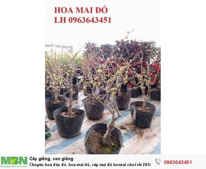 Chuyên hoa đào đỏ, hoa mai đỏ, cây mai đỏ bonsai chơi tết, hàng chuẩn đẹp, giá sỉ tốt nhất thị trường5