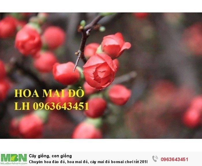 Chuyên hoa đào đỏ, hoa mai đỏ, cây mai đỏ bonsai chơi tết 2018, hàng chuẩn đẹp, giá sỉ tốt nhất thị trường4