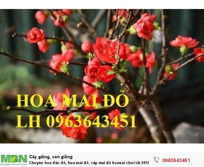 Chuyên hoa đào đỏ, hoa mai đỏ, cây mai đỏ bonsai chơi tết, hàng chuẩn đẹp, giá sỉ tốt nhất thị trường6
