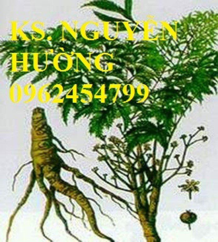 Địa chỉ cung cấp giống cây dược liêu, cây giống, hạt giống đương quy. giao cây toàn quốc2