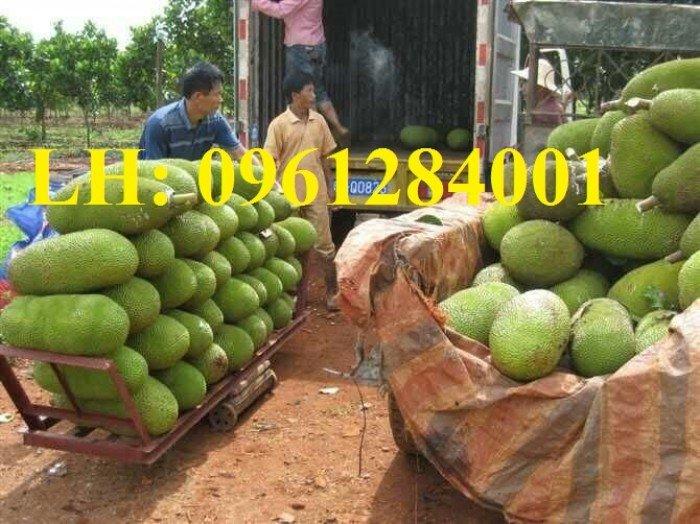 Địa chỉ chuyên cung cấp cây giống ăn quả, cây giống mít trái dài, mít malaysia. giao hàng toàn quốc3