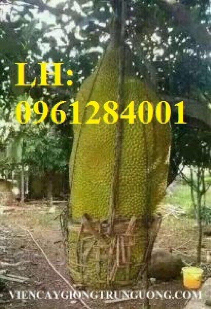 Địa chỉ chuyên cung cấp cây giống ăn quả, cây giống mít trái dài, mít malaysia. giao hàng toàn quốc1