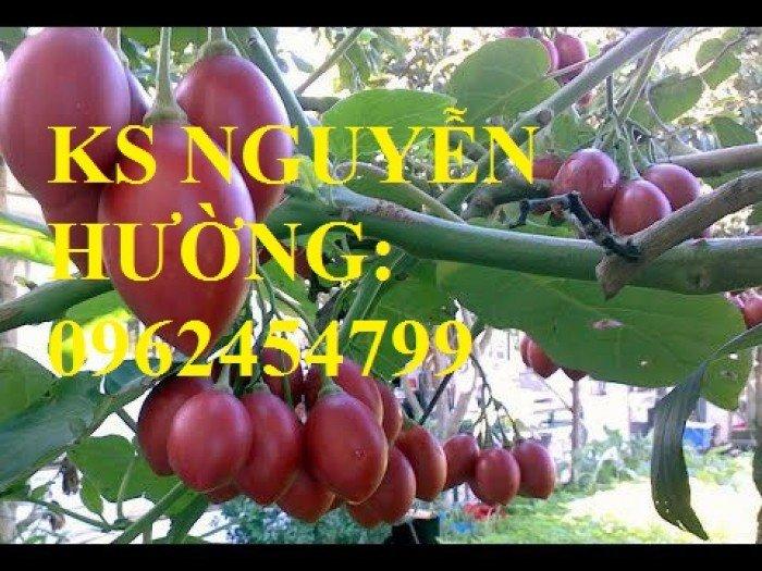 Cung cấp cây giống cà chua than gỗ, cây giống ăn quả các loại. giao cây toàn quốc1