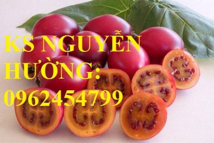 Cung cấp cây giống cà chua than gỗ, cây giống ăn quả các loại. giao cây toàn quốc2