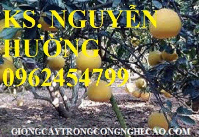 Cung cấp giống cây bưởi diễn, cây giống ăn quả các loại, giao cây toàn quốc3