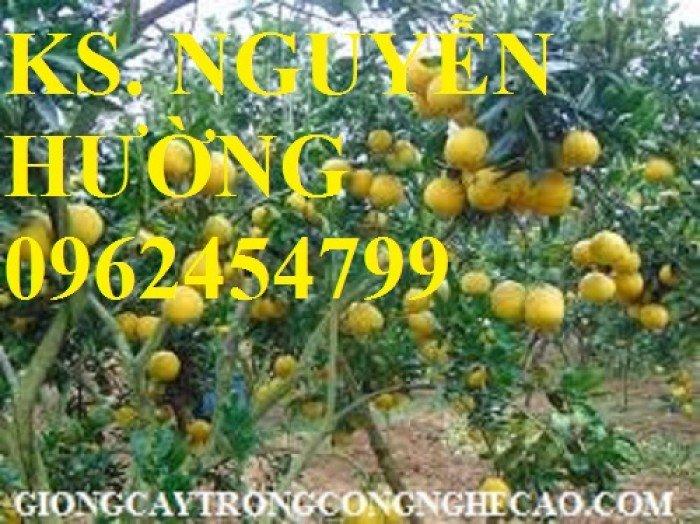 Cung cấp giống cây bưởi diễn, cây giống ăn quả các loại, giao cây toàn quốc1