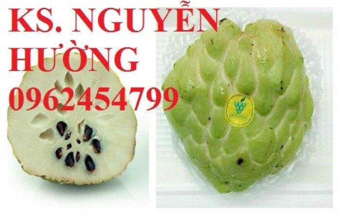 Cây na, cây giống na bở đài loan nhập khẩu. địa chỉ chuyên cung cấp các loại cây giống ăn quả7
