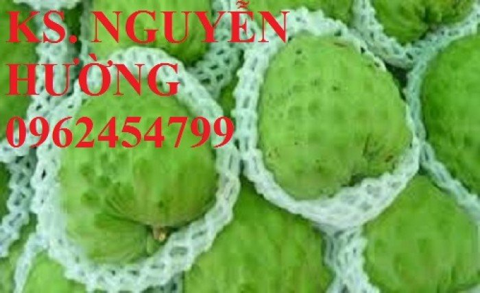 Cây na, cây giống na bở đài loan nhập khẩu. địa chỉ chuyên cung cấp các loại cây giống ăn quả8