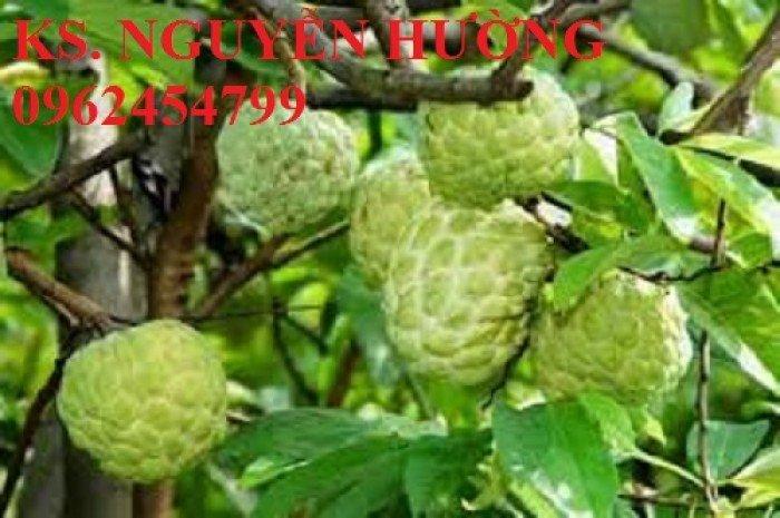 Cây na, cây giống na bở đài loan nhập khẩu. địa chỉ chuyên cung cấp các loại cây giống ăn quả6