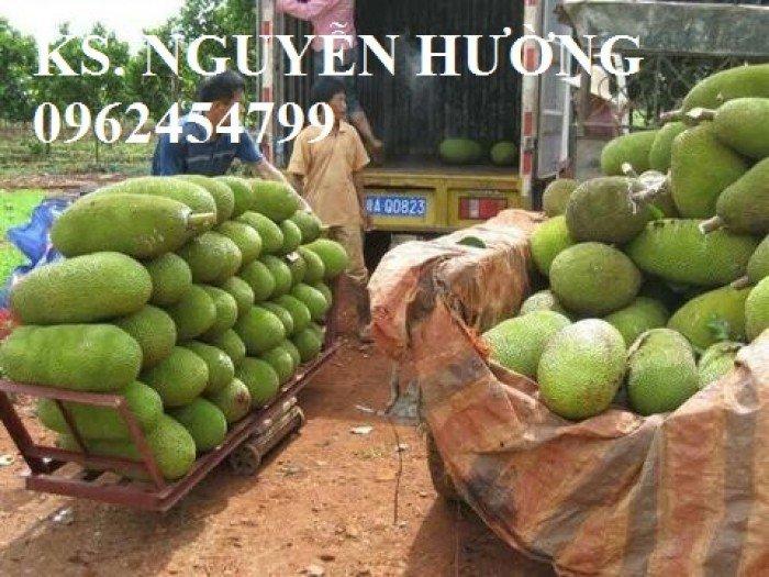 Mít trái dài, mít malaysia. Đơn vị cung cấp các loại cây giống ăn quả toàn quốc, giao cây toàn quốc11