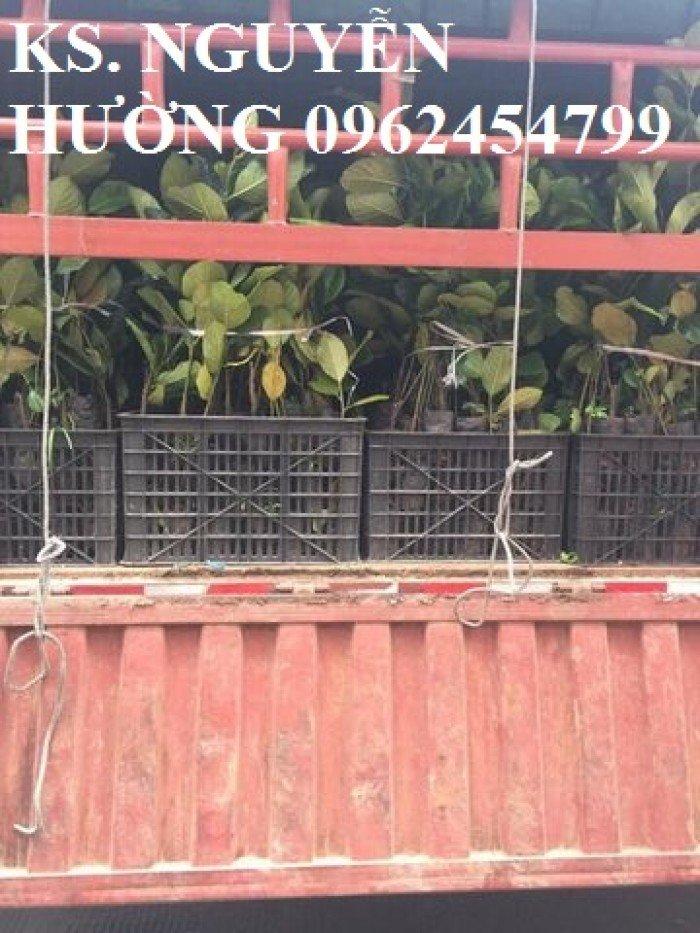 Mít trái dài, mít malaysia. Đơn vị cung cấp các loại cây giống ăn quả toàn quốc, giao cây toàn quốc5