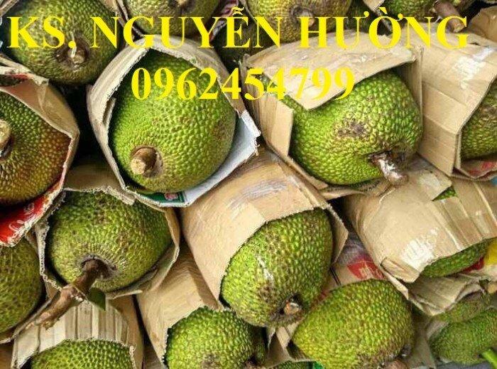 Mít trái dài, mít malaysia. Đơn vị cung cấp các loại cây giống ăn quả toàn quốc, giao cây toàn quốc9