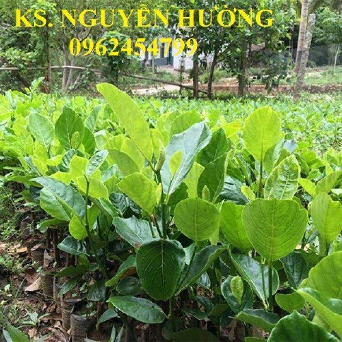 Mít trái dài, mít malaysia. Đơn vị cung cấp các loại cây giống ăn quả toàn quốc, giao cây toàn quốc7