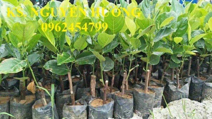 Mít trái dài, mít malaysia. Đơn vị cung cấp các loại cây giống ăn quả toàn quốc, giao cây toàn quốc10
