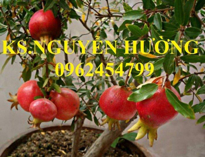 Cung cấp cây giống lựu đỏ, cây lựu lùn ấn độ. Cây giống đảm bảo chất lượng - giao cây toàn quốc6