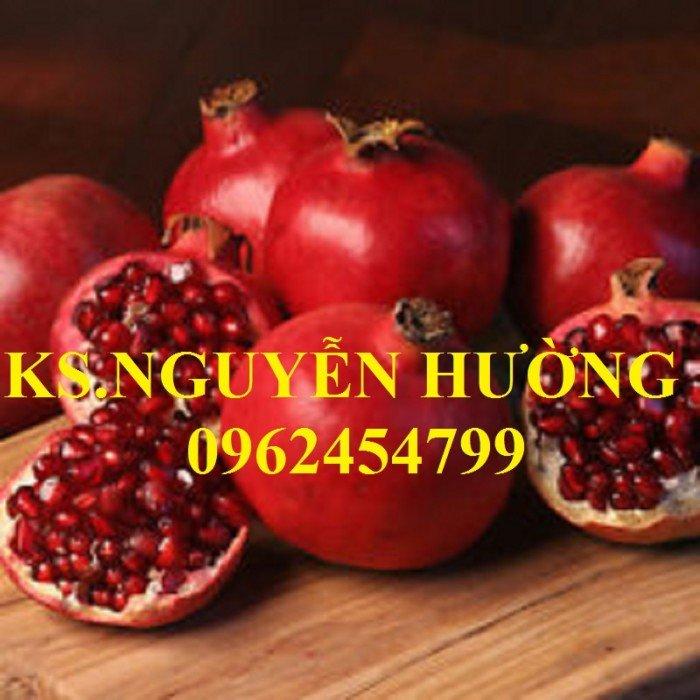 Cung cấp cây giống lựu đỏ, cây lựu lùn ấn độ. Cây giống đảm bảo chất lượng - giao cây toàn quốc1