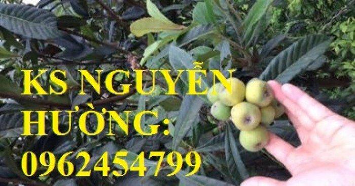 Cây giống biwa, cung cấp cây giống chất lượng, địa chỉ cung cấp cây, giao cây toàn quốc5